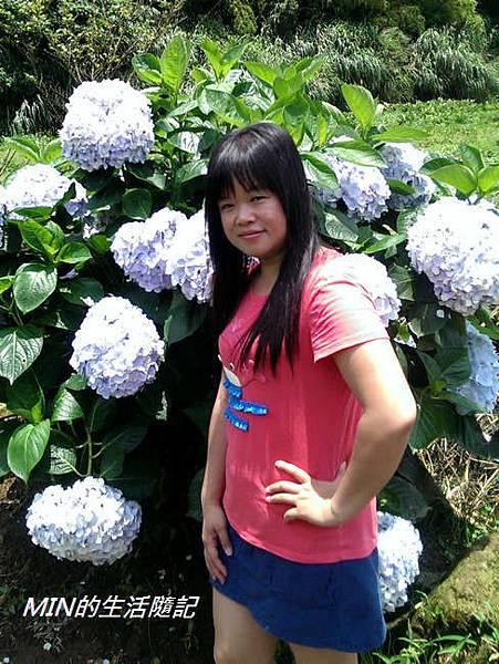 陽明山繡球花(17)