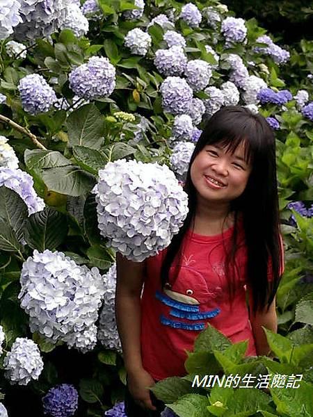 陽明山繡球花(30)