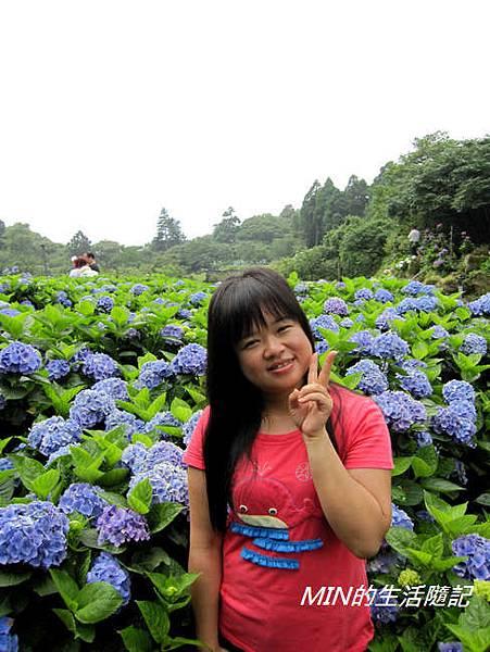 陽明山繡球花(41)