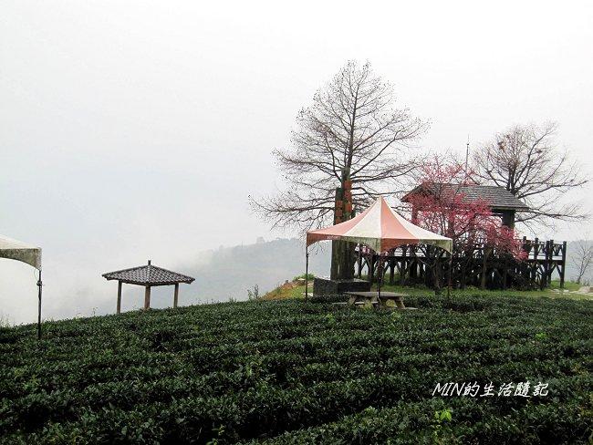 玉蘭茶園 (6).JPG