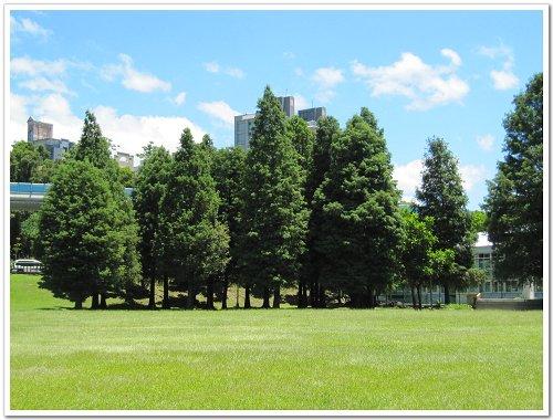 大湖公園 (3).jpg