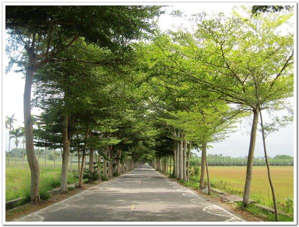 龍田綠色隧道 (1).JPG