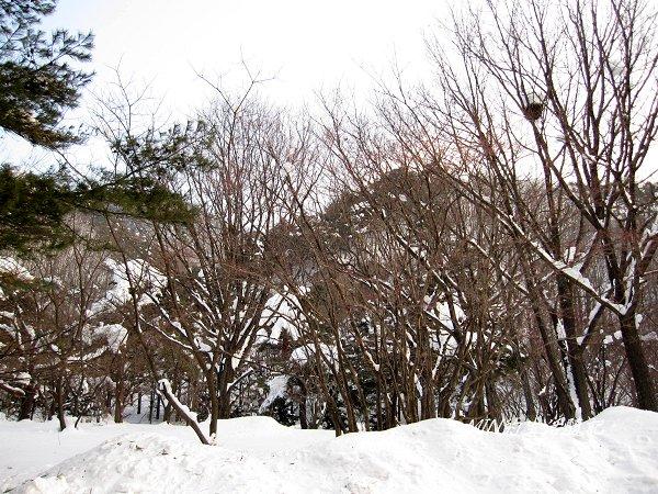 雪嶽山國家公園 (9).jpg