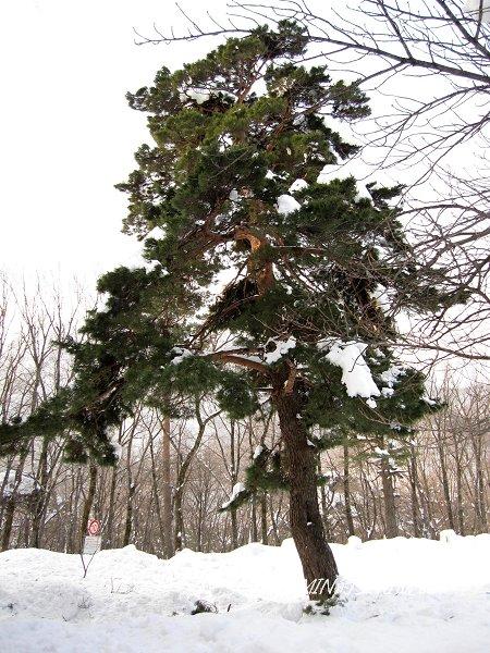 雪嶽山國家公園 (12).jpg