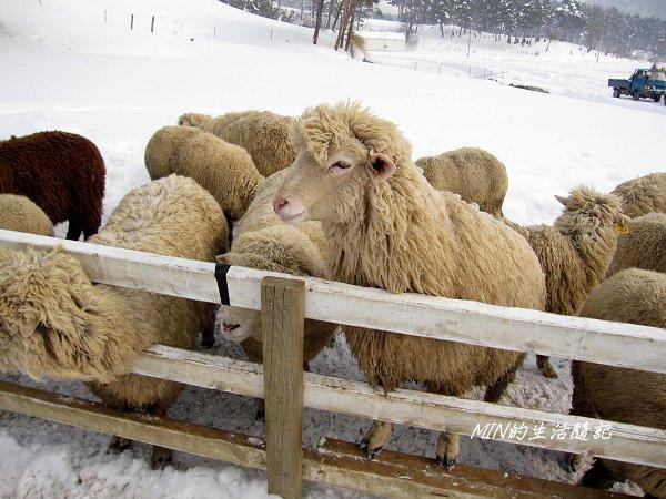 大關嶺餵羊+滑雪 (2).jpg