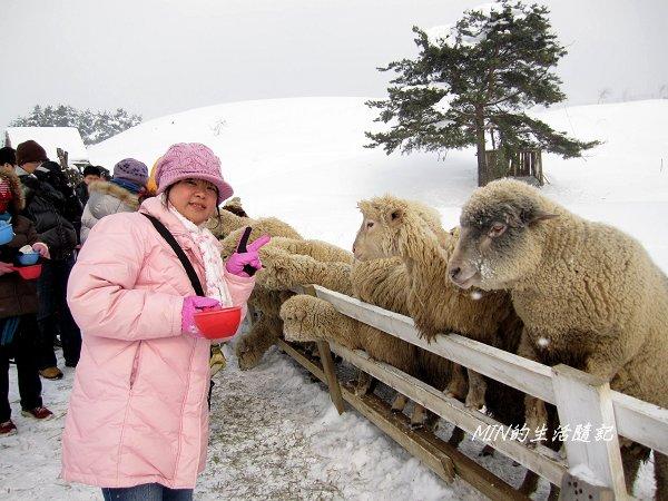 大關嶺餵羊+滑雪 (3).jpg