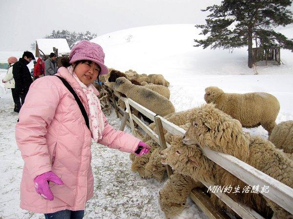 大關嶺餵羊+滑雪 (4).jpg