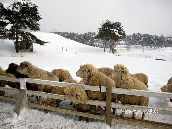 大關嶺餵羊+滑雪 (1).jpg