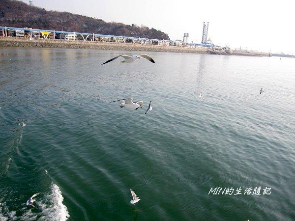 海鷗船 (6).jpg