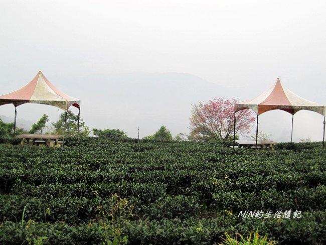 玉蘭茶園 (4).JPG