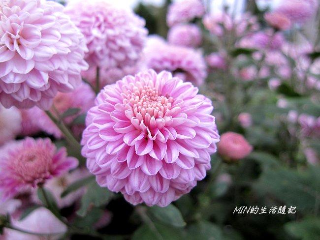 99年東勢林場 (68).JPG