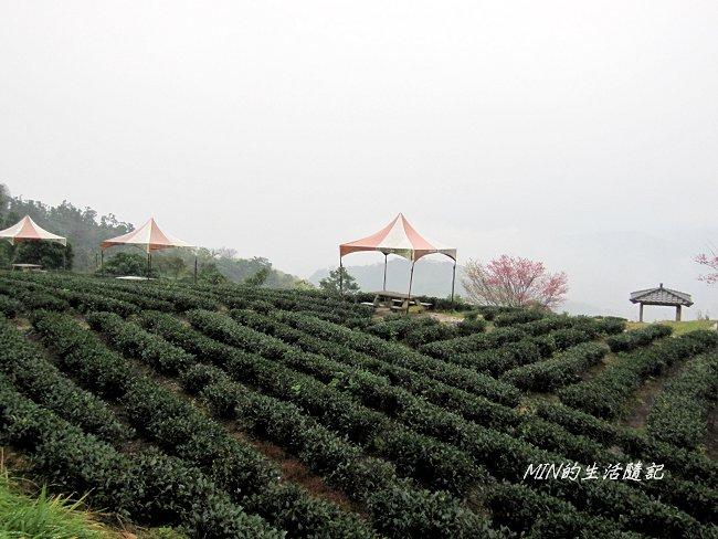 玉蘭茶園 (3).JPG