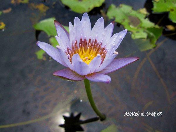 台北植物園 (32).JPG