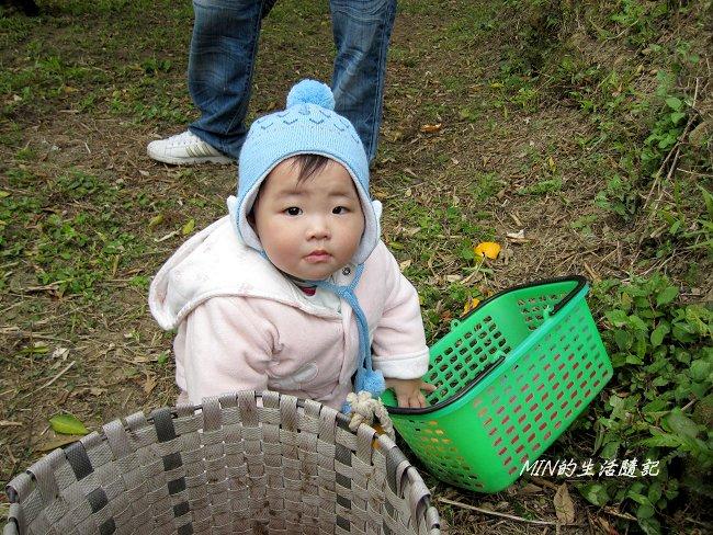 2011苗栗採果 (39).JPG