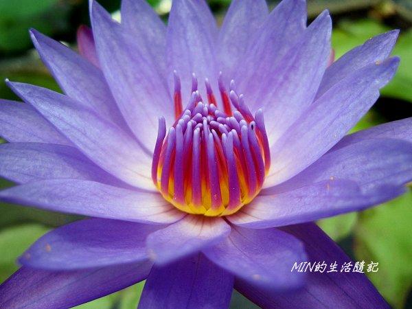 台北植物園 (34).JPG
