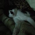 被棉被蓋住也只好睡了 但又得被偷拍