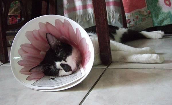 憂鬱少年一朵花