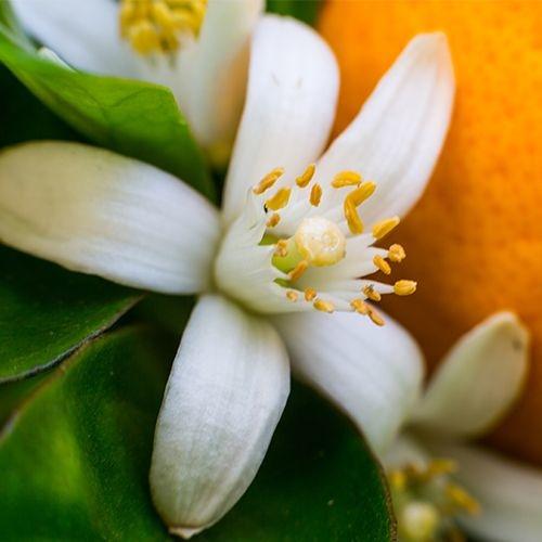 eminence-organics-neroli-flower.jpg
