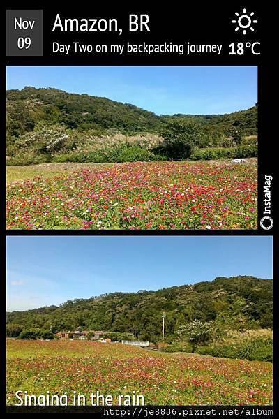 蘆竹花海 020.jpg