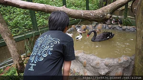 森林鳥花園 022.JPG