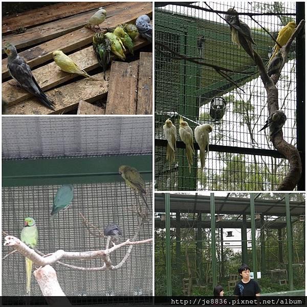 森林鳥花園 023.JPG