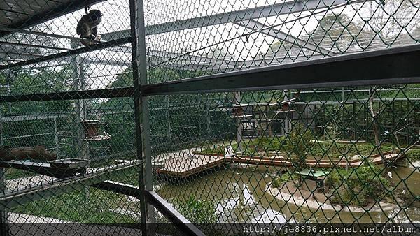 森林鳥花園 035.JPG