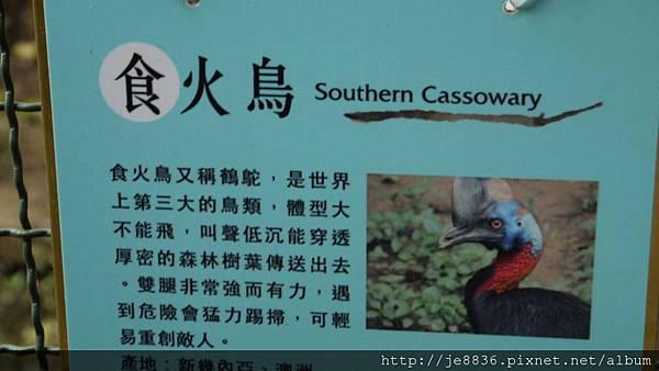 森林鳥花園 038.JPG