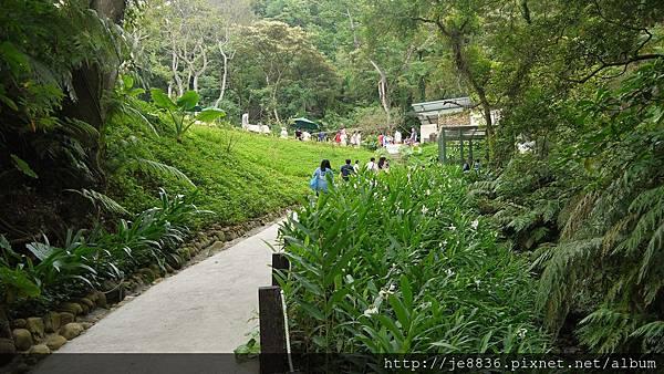 森林鳥花園 039.JPG