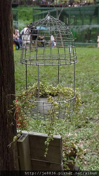 森林鳥花園 052.JPG