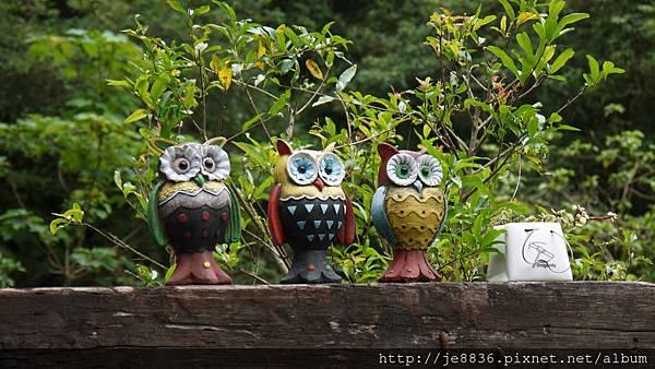 森林鳥花園 053.JPG