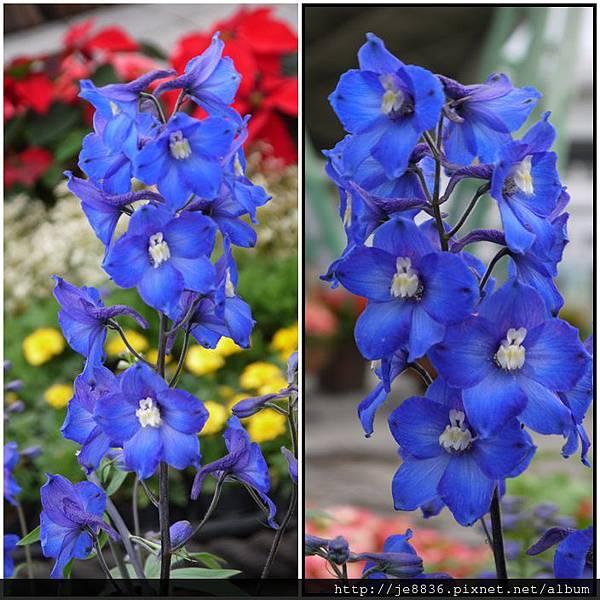 1212台北花卉展 005