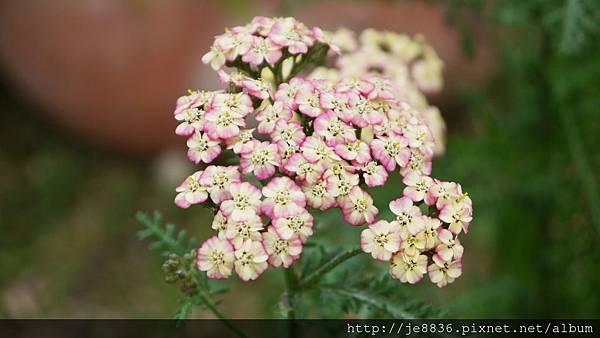 1212台北花卉展 017