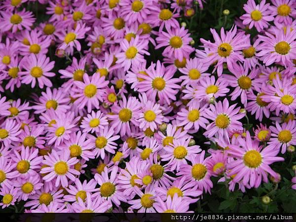 1212台北花卉展 049