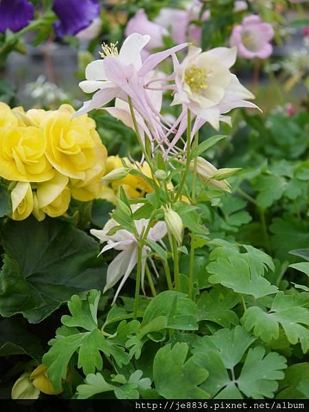 1212台北花卉展 053