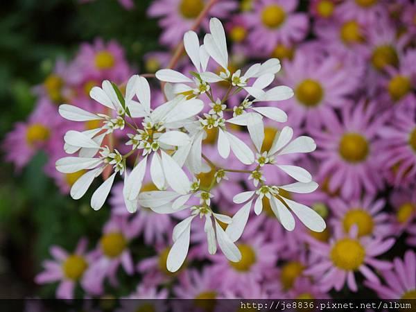 1212台北花卉展 055