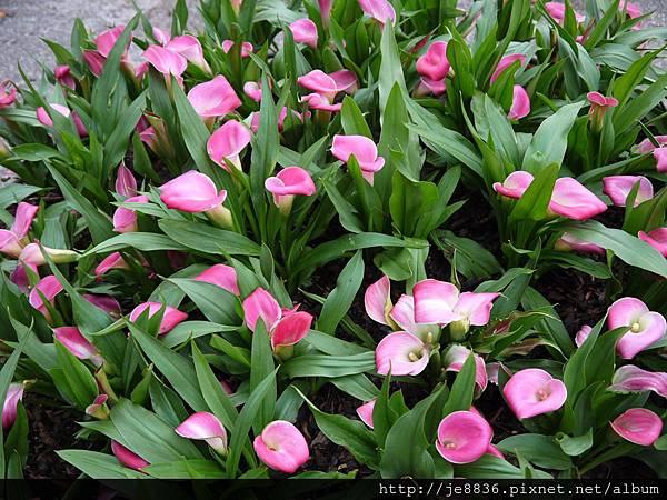 1212台北花卉展 087