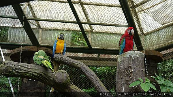 1102動物園 023.JPG