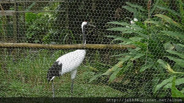 1102動物園 028.JPG