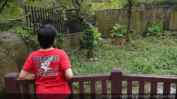 1102動物園 035.JPG