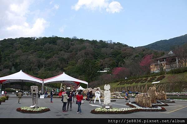 0129陽明山花季 (7).JPG