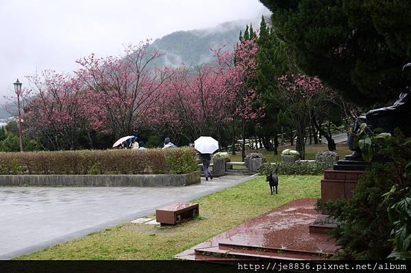 0214陽明山花季 020.JPG