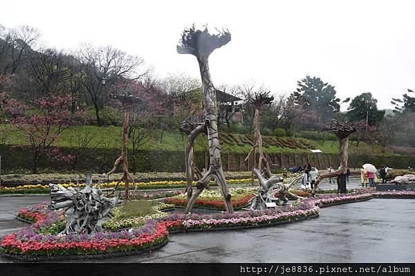 0214陽明山花季 032.JPG