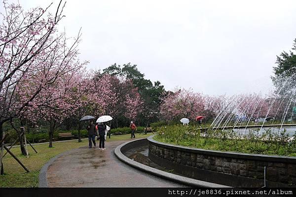 0214陽明山花季 075.JPG