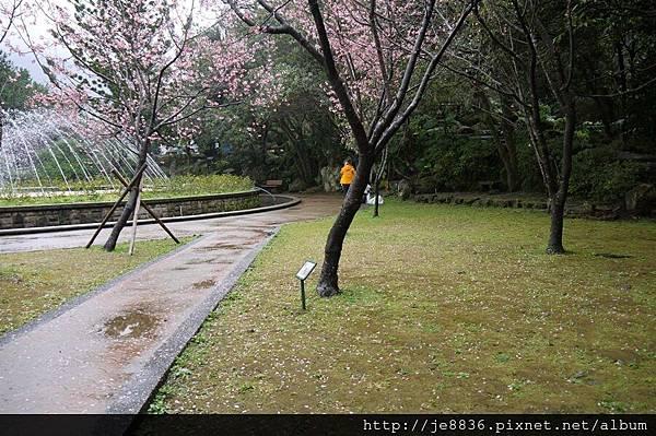 0214陽明山花季 076.JPG