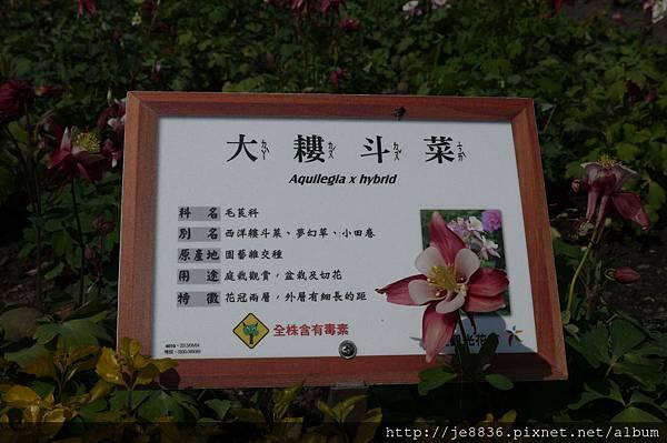 0222中社花市 (48).JPG