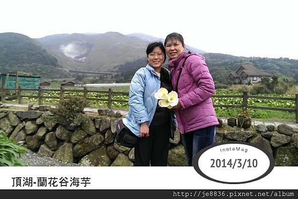 0310頂湖海芋 (16).jpg