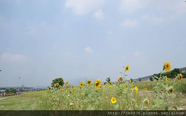 0903幸福水漾公園 004.JPG