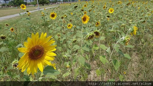 0903幸福水漾公園 009.JPG