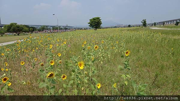 0903幸福水漾公園 010.JPG