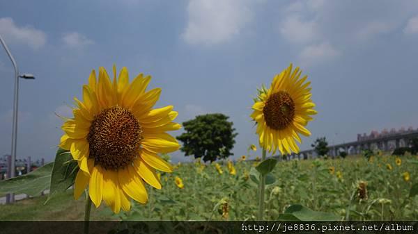 0903幸福水漾公園 011.JPG